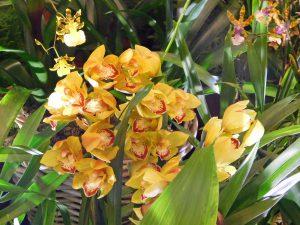 Orchidee-10