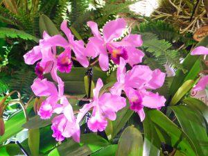 Orchidee-12