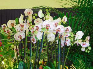 Orchidee-16