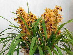 Orchidee-22