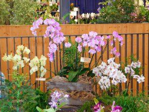 Orchidee-45