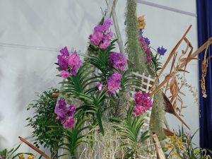 Orchidee-5